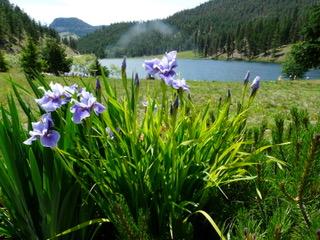 Okanagan Iris Tour